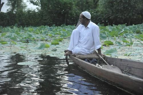 The introspective, Dal Lake, Srinagar, Kashmir, India