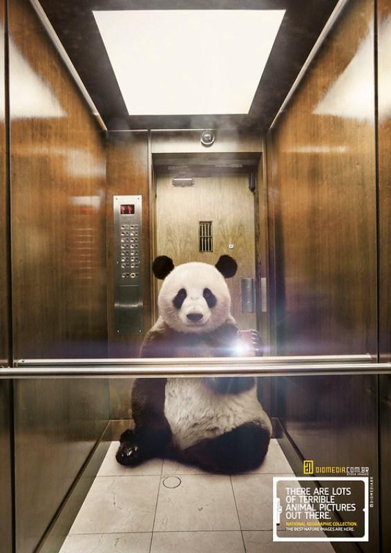Diomedia - Panda