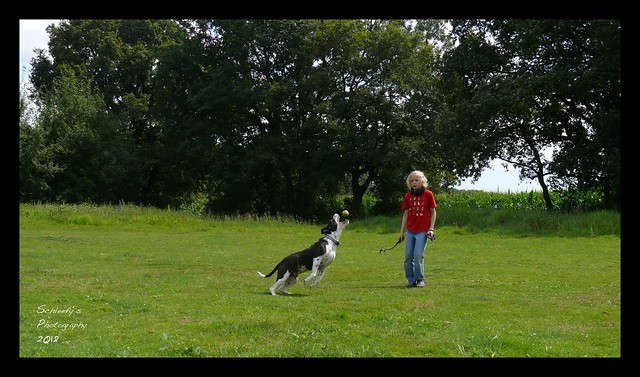 Dog Sport IV