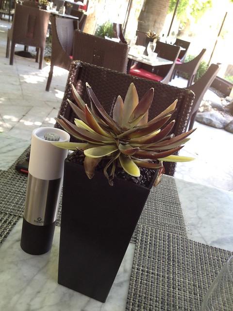Succulent plant centerpiece - Circa 59