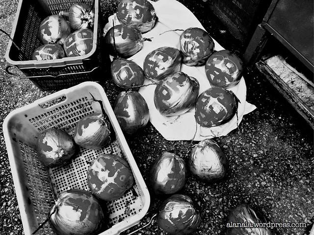 Wedding Coconuts