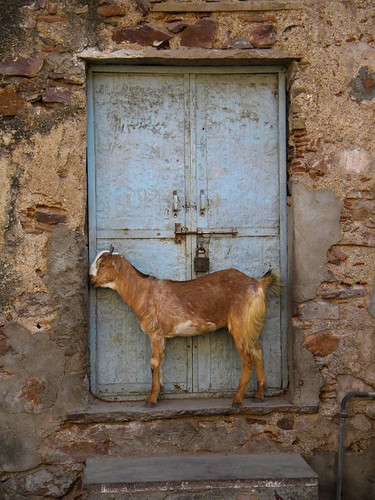let me in... (Bundi, India)