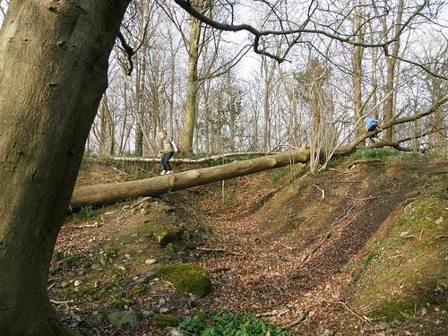 Tree-trunk balancing