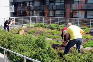 Prepping the Garden