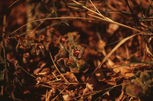 Macro Plant