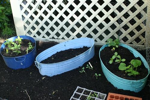 Plants in pretty blue washtubs