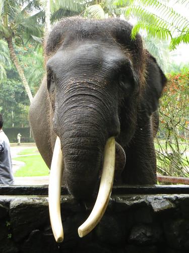 my first elephant