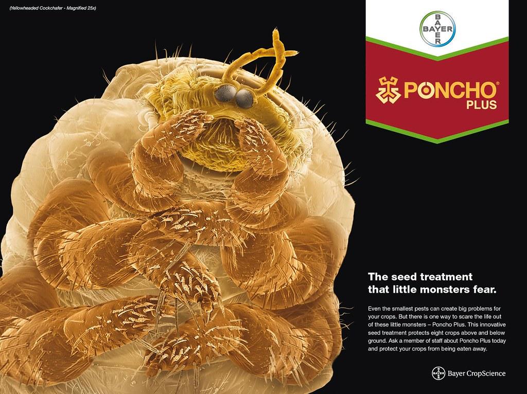 Poncho Plus - Yellowheaded Cockchafer