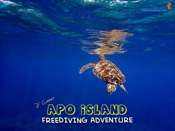 the great apo island freediving adventure