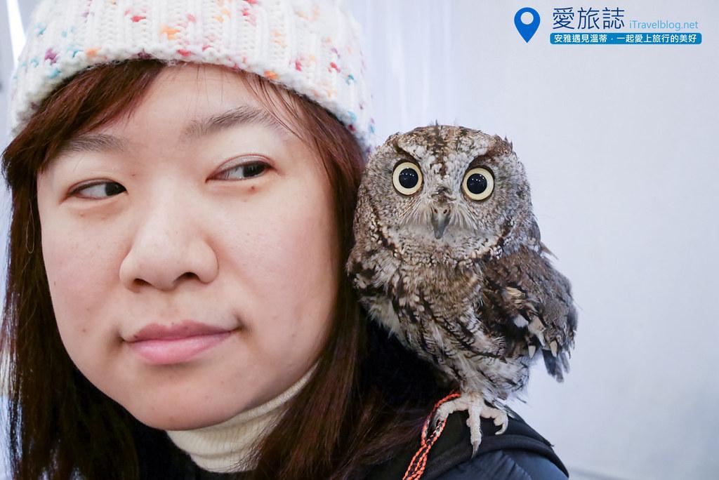 《大阪景点推荐》OWL Family猫头鹰咖啡厅:一小时亲密接触