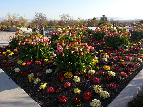 4-24-13 Provo Temple in bloom 1