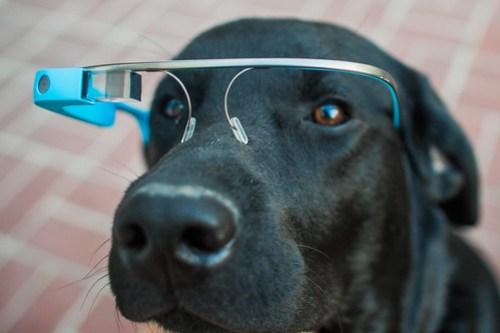Ok Glass, Get Dogfood