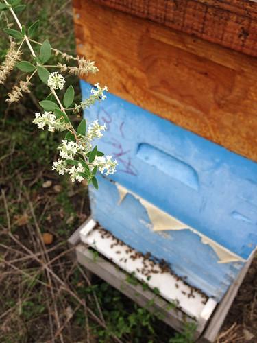 Bee Brush and hive