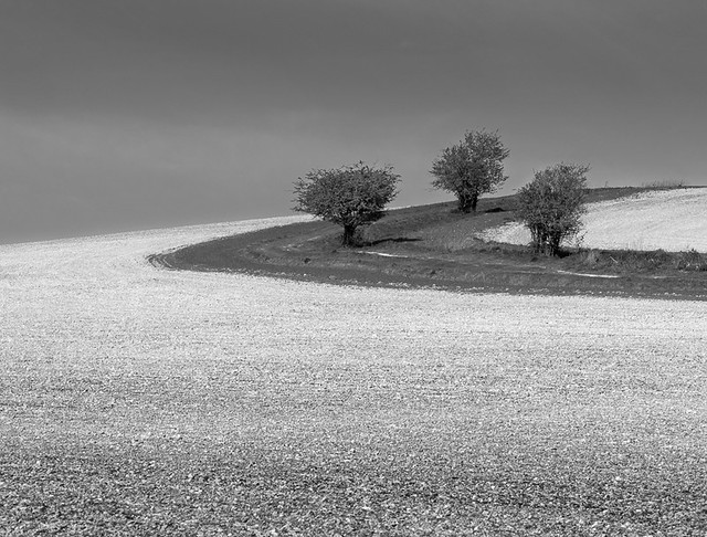 Pen Hill trees