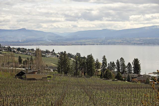 early springs vineyard