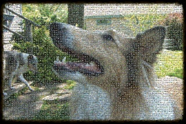 Kip and Em in Mosaic