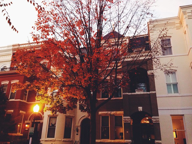 Fall in Georgetown