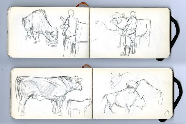 cattle_bison_sm