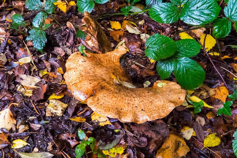 Nestling under the undergrowth