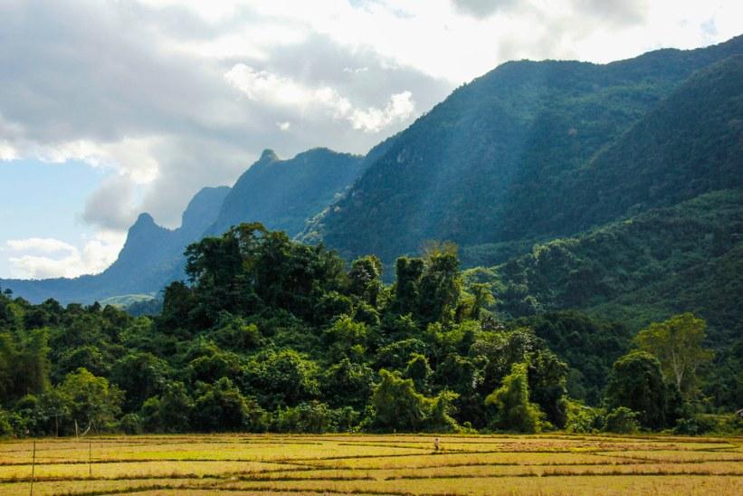 Rismarker i Laos