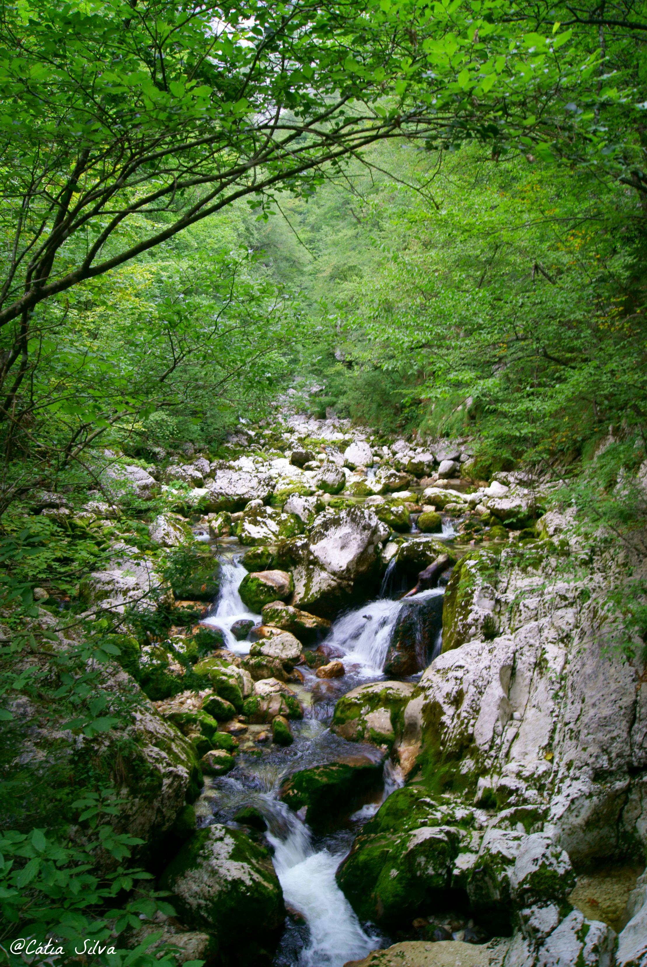 Slap Slavica - Lago Bohinj - Eslovenia (4)