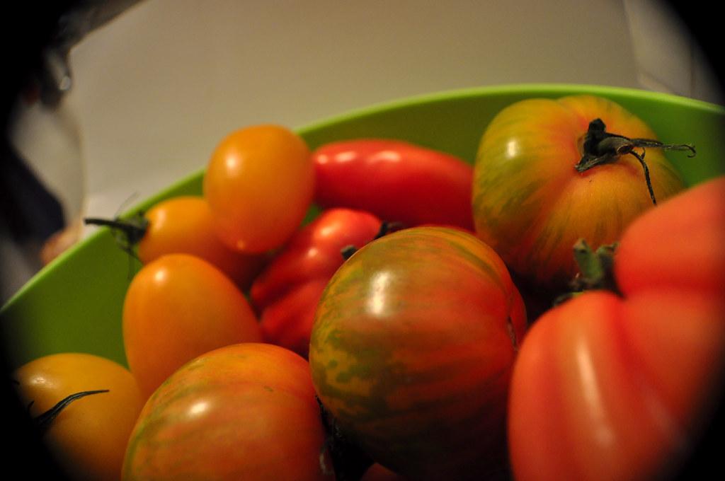 Tomates Multicolores_4