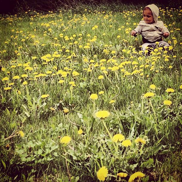 avery in flowers 2