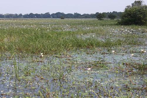 20130114_6975-en-route-to-Anuradhapura_Vga