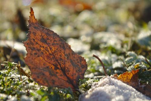 Autumn's last stand.