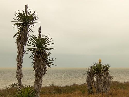 The Lagoon of Laguna Atascosa.  Photo by Brendan McGarry