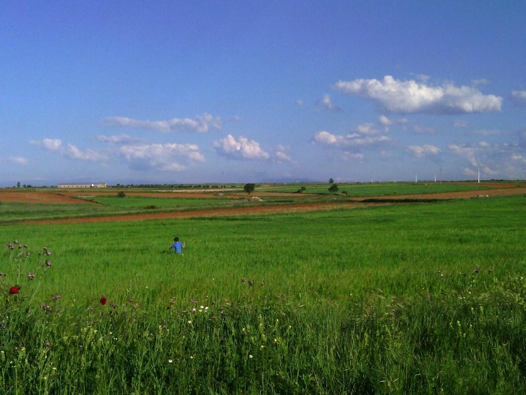 Paisaje de La Mancha en mayo, junto a una vía pecuaria