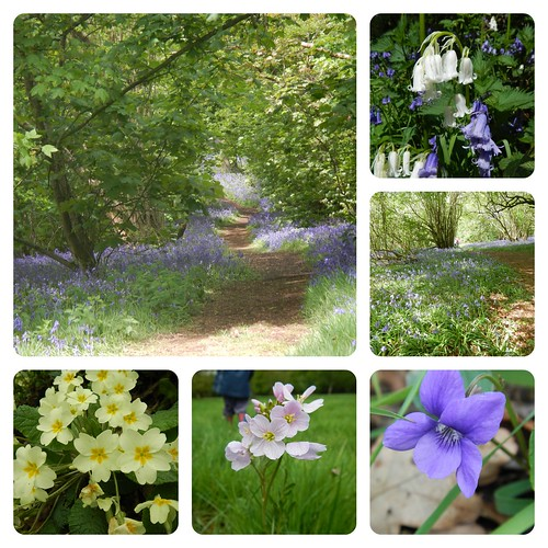 Some of the beautiful flowers from today's walk at Yoxall Lodge Woods