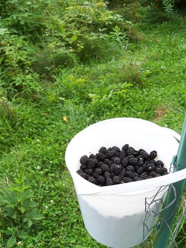 blackberries for me