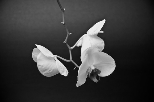 2008-01-06 - The Orchid (1 of 3)