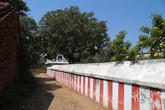 Way to Krishna tree and Roma maharishi shrine