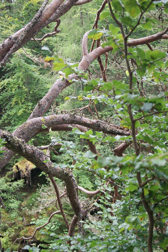 Forêt à proximité d'Invermoriston