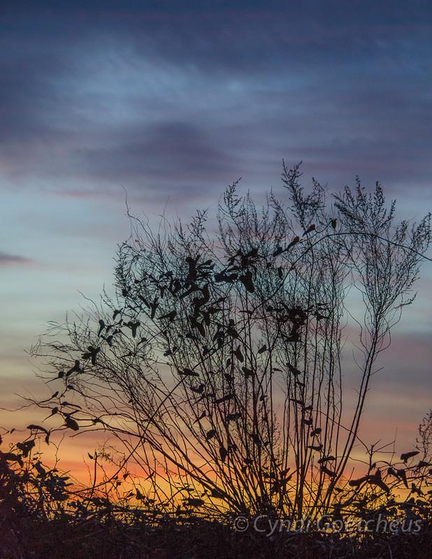 sunset wabi sabi