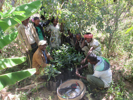 Fruit grafting training _Adwa (Photo:ILRI\ Gebremedhin Woldewahid)