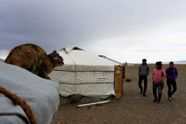 Gobi desert (11)