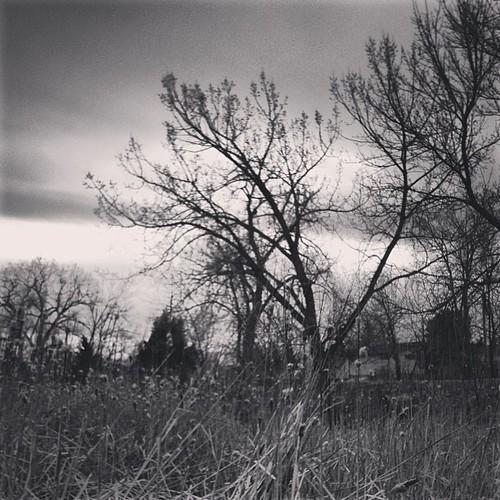 Last Light #willow by @MySoDotCom