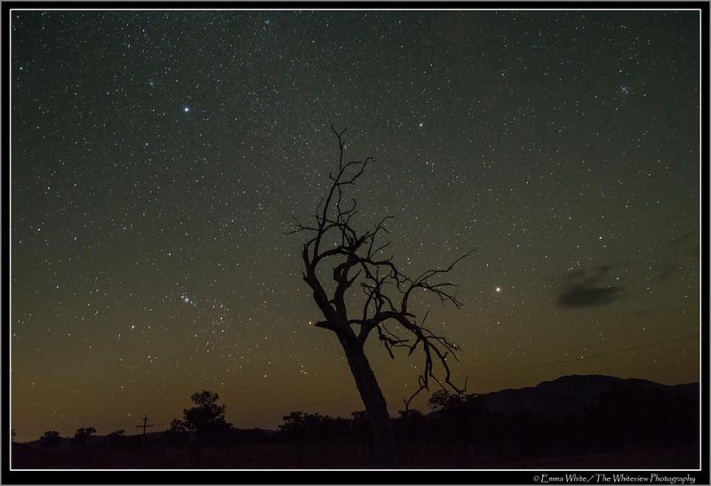 Night Dancer