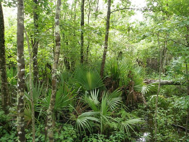 Zona pantanosa en Barataria