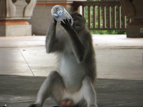 taking a swig