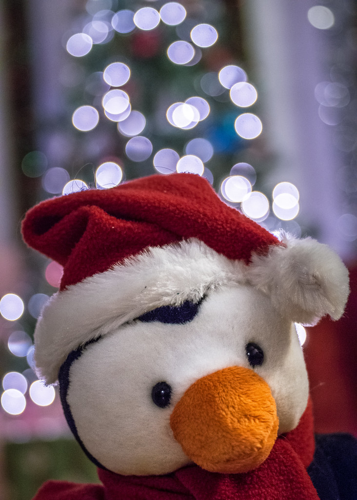 Pinguin Bokeh