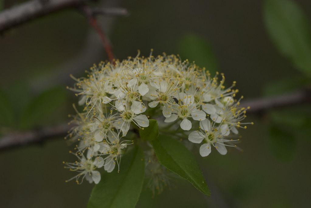 Unknown shrub