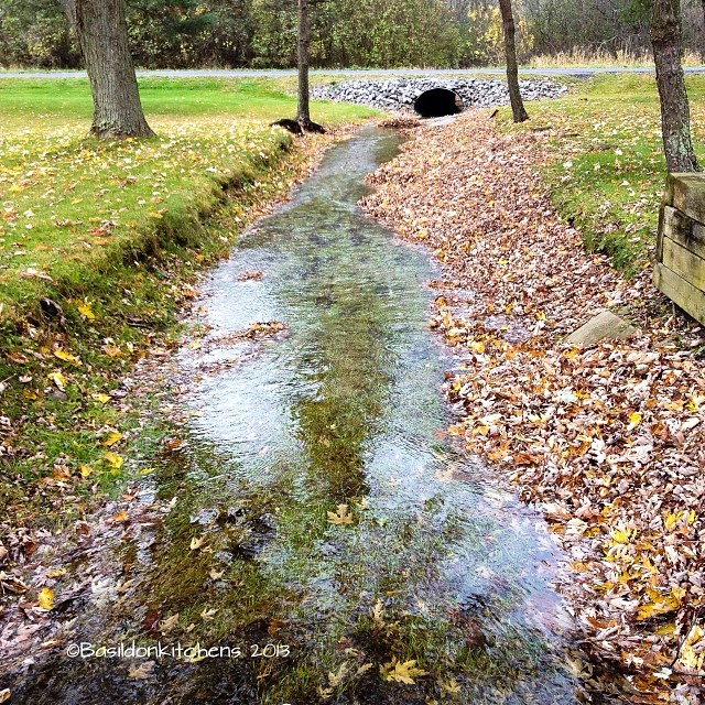 Nov 2 - front page news {our creek is running!} Not news for everyone; but very important for us! #photoaday #creek #water #flowing #princeedwardcounty #milford #picton #countrylife