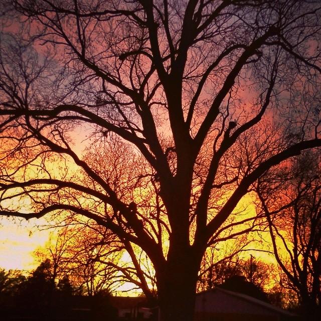 My own Oklahoma backyard sunset.  Or, wowza. #oklahomacity #oklahoma #okc #sunset #winter #pecantree
