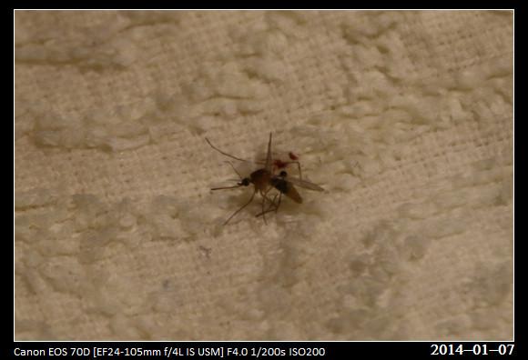 20140107_Mosquito