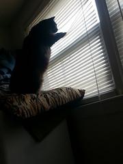 pyewacket the cat