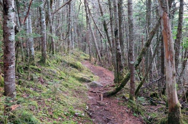 Tecumseh Trail Ski Area Near Summit